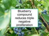Blueberry compound reduces triple negative proliferation