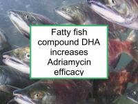 Fatty fish DHA increases Adriamycin efficacy
