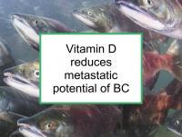 Vitamin D reduces metastatic potential of BC