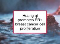 Huang qi promotes ER+ proliferation