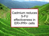 Cadmium reduces 5-FU effectiveness in ER+/PR+