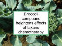 Broccoli compound heightens effects of taxane chemotherapy