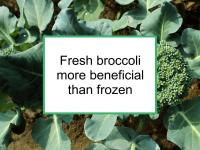 Fresh broccoli more beneficial than frozen