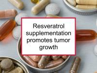 Resveratrol supplementation promotes tumor growth