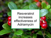 Resveratrol increases effectiveness of Adriamycin