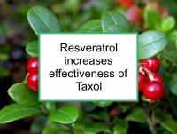Resveratrol increases effectiveness of Taxol