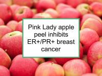 Pink Lady apple peel inhibits ER+/PR+ breast cancer
