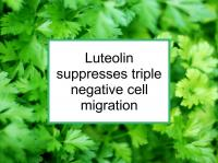 Luteolin suppresses triple negative cell migration