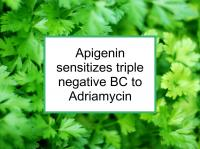 Apigenin sensitizes triple negative BC to Adriamycin