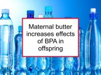 Maternal butter increases effects of BPA in offspring