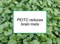 PEITC reduces brain mets