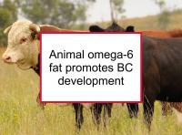 Animal omega-6 fat promotes BC development