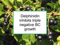 Delphinidin inhibits triple negative BC growth