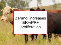 Zeranol increases ER+/PR+ proliferation