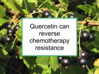 Quercetin can reverse chemotherapy resistance
