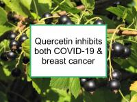 Quercetin inhibits both COVID-19 & breast cancer