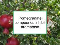 Pomegranate compounds inhibit aromatase