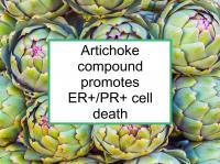 Artichoke promotes ER+/PR+ death