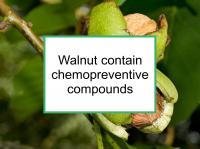 Walnuts contain chemopreventive compounds