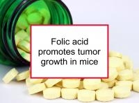 Folic acid promotes tumor growth in mice