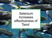 Selenium increases effectiveness of Taxol
