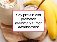 Soy protein diet promotes mammary tumor development