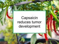 Capsaicin reduces tumor development