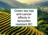 Green tea helpful in tamoxifen resistant BC