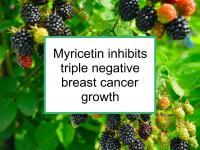 Myricetin inhibits triple negative breast cancer growth