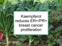 Kaempferol reduces ER+/PR+ proliferation
