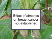 Effect of almonds on breast cancer not established