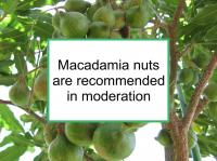 Effect of macadamia nuts on breast cancer not established