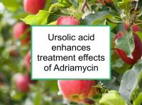 Ursolic acid enhances treatment effects of Adriamycin