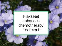 Flaxseed enhances chemotherapy treatment