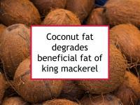 Coconut fat degrades beneficial fat of king mackerel