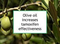 Olive oil increases tamoxifen effectiveness