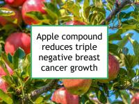 Apple compound reduces triple negative breast cancer growth