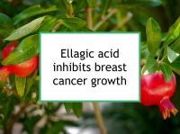 Ellagic acid inhibits breast cancer growth