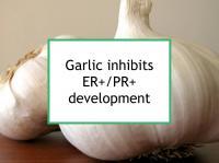 Garlic inhibits ER+/PR+ development