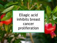 Ellagic acid inhibits breast cancer proliferation