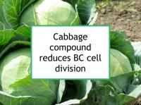 Cabbage compound reduces BC cell division