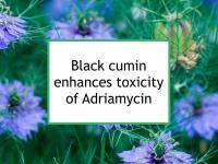 Black cumin enhances toxicity of Adriamycin