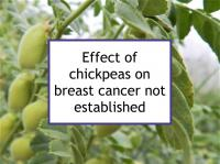 Effect of chickpeas on breast cancer not established