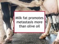 High milk fat diet promotes metastasis in mice